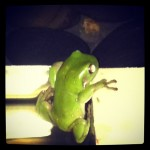 instagram frog Blogging Instagram photos
