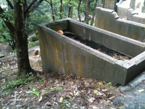 Jas Miller IREAND Grave