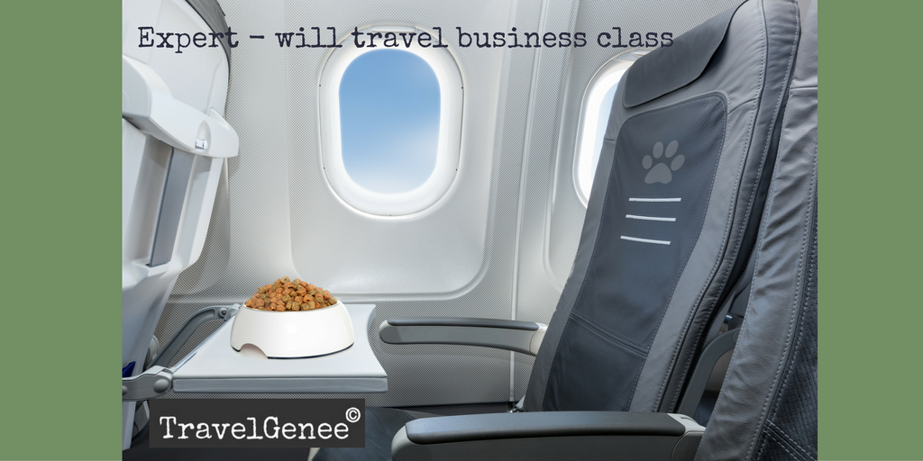 Have blog will travel business class